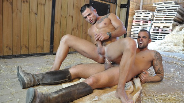 The Stable - feat Damien Crosse, David Dirdam